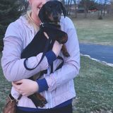 Looking for a pet sitter to watch my little doxie when Im away on weekends!