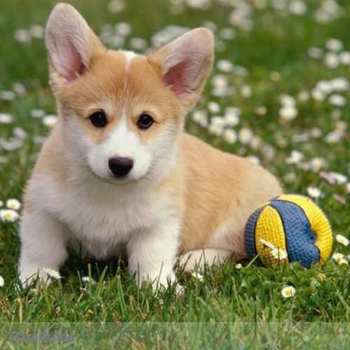 Pet Care Provider Ben Larsen's Profile Picture