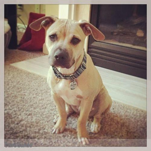 Pet Care Job Juli Roberts's Profile Picture