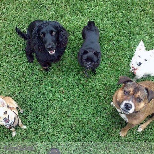 Pet Care Provider Quinn D's Profile Picture
