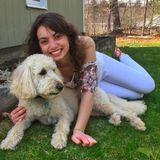 Talented Pet Trainer in Kingston