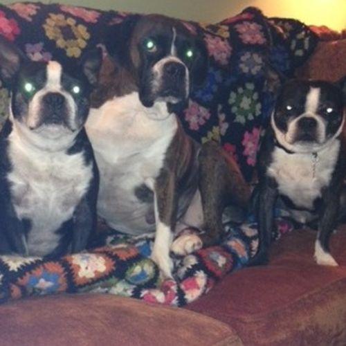 Pet Care Provider Joshua/Janet B's Profile Picture