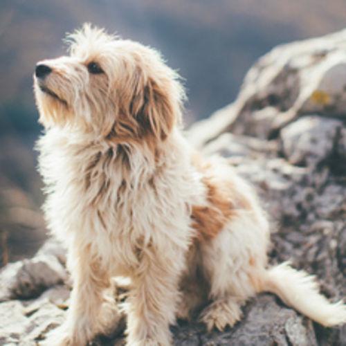 Pet Care Job D R's Profile Picture