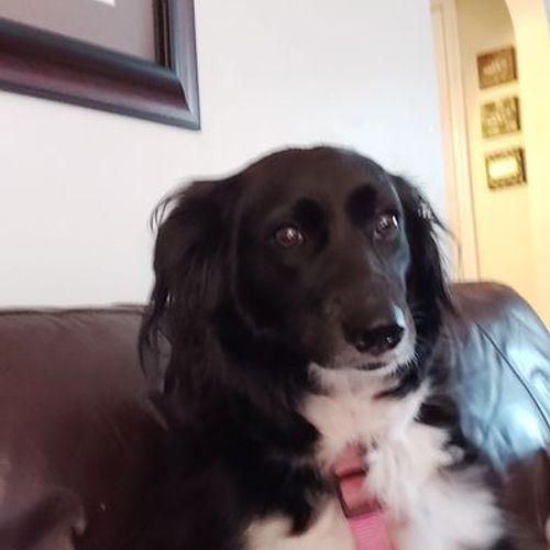 Pet Care Provider Susan W's Profile Picture
