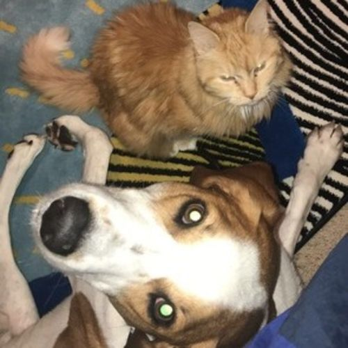 Pet Care Provider Marley L Gallery Image 1