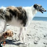 Dog Walker, Pet Sitter in Kissimmee