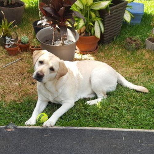 Pet Care Provider Sandy Devine's Profile Picture