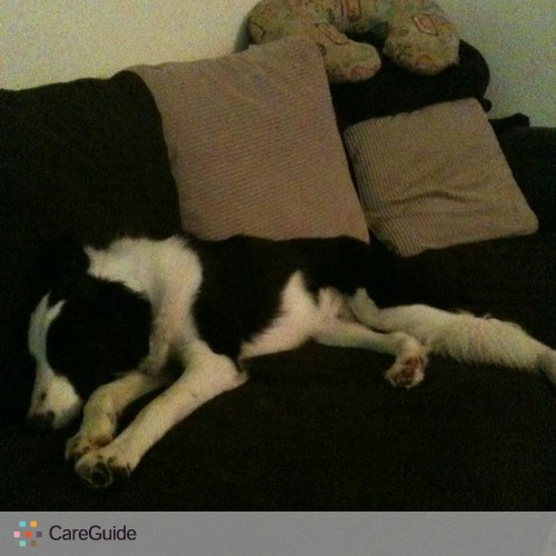 Pet Care Provider Marissa Foreman's Profile Picture