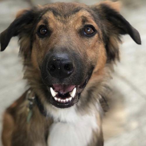Job Posting Dog Sitter Dog Walker Dog Walker Job Pet Sitter Job In Brampton On Petsitter Com