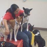 Dog Walker, Pet Sitter in Spring Valley