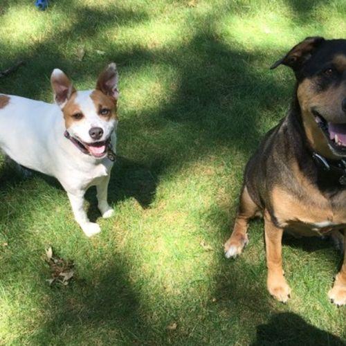 Pet Care Provider Barkies Dog Walks & Pet Care LLC Gallery Image 2