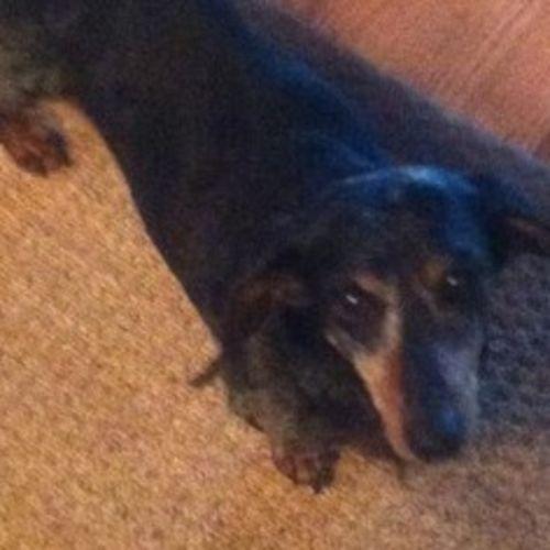 Pet Care Provider Brittany P's Profile Picture