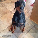 Dog Walker Job, Pet Sitter Job in Phoenix