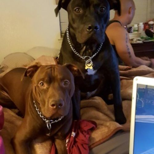 Pet Care Job Alexandra Sheppard's Profile Picture