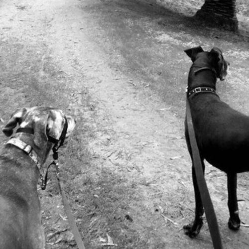 Pet Care Provider Delani Graham Gallery Image 1