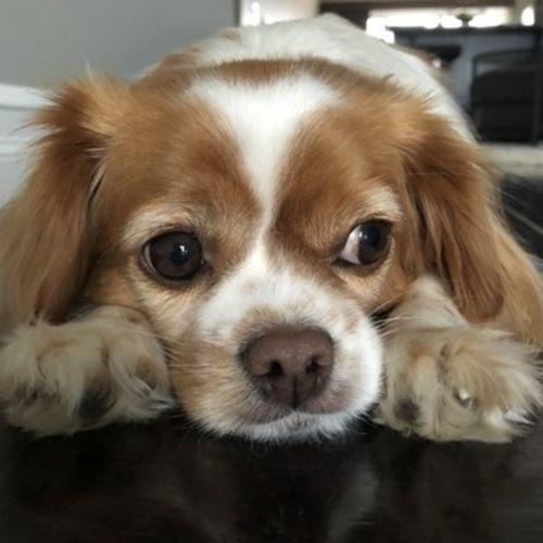 Pet Care Provider Olga G's Profile Picture