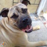 Dog Walker, Pet Sitter in Signal Hill