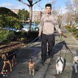 Dog Walker, Pet Sitter in Oakland