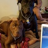 Overnight Pet Sitter Comfortable W/ Lrg Dogs