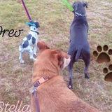 Pet Care Provider in Augusta, Georgia