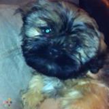 Dog Walker, Pet Sitter in Brampton
