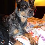 Dog Walker, Pet Sitter in Palmyra