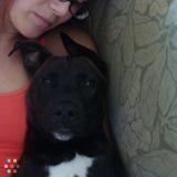 Dog Walker in Key West