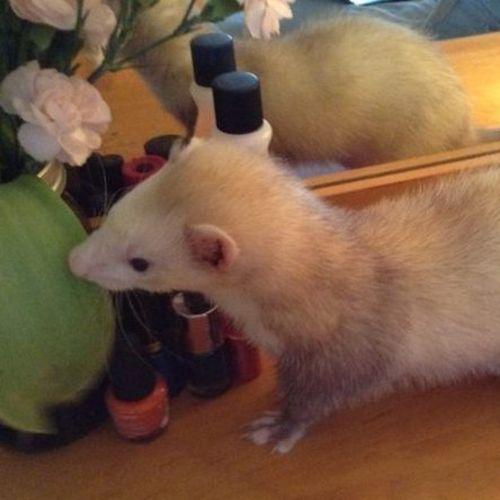 Pet Care Provider Peggy F's Profile Picture