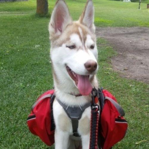 Pet Care Job Sonny Mai's Profile Picture