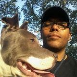 Dog Walker in New York City
