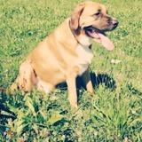 Dog Walker, Pet Sitter in Saint Peters