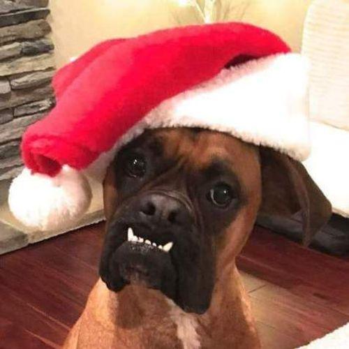 Pet Care Provider Toni Dillhoff's Profile Picture