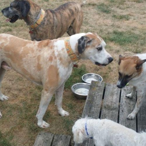 Pet Care Provider Dawn M Gallery Image 1