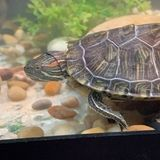 I have 5 fish tanks, two dogs, a turtle, and two birds! I have experience with different types of animals.