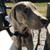 Pet Sitter Job in Hooksett