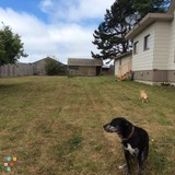 Dog Walker, Pet Sitter in Eureka