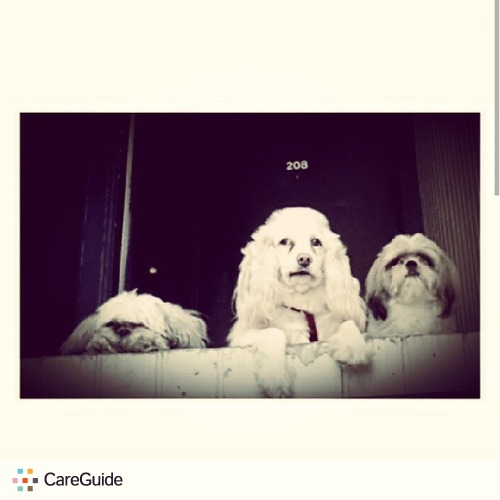 Pet Care Provider Robert Allen's Profile Picture