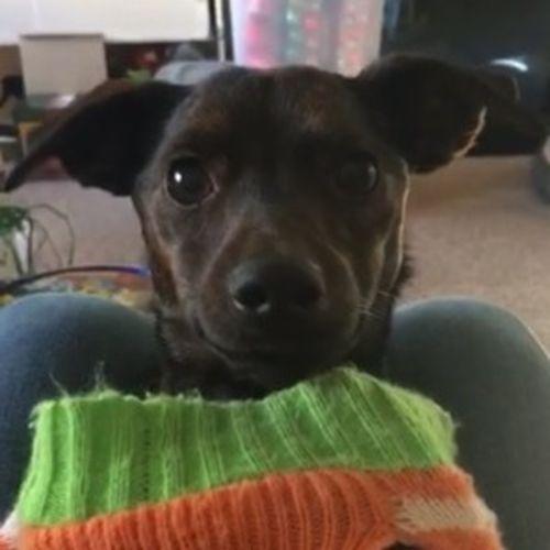 Pet Care Provider Bekka G's Profile Picture