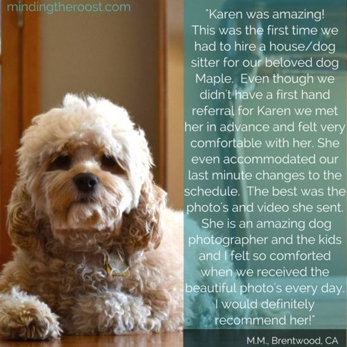Pet Care Provider Karen S Gallery Image 3