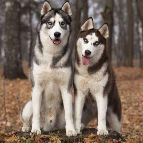 Pet Care Provider Larry Medina Gallery Image 1