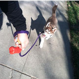 San Luis Obispo Pet Sitter, Trainer, Walker.