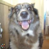 Dog Walker, Pet Sitter in Marlboro