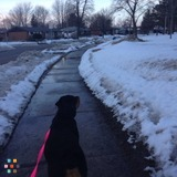 Dog Walker, Pet Sitter in Kitchener
