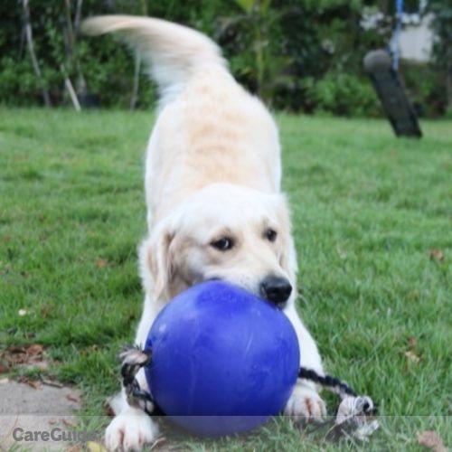 Pet Care Provider Luxury D's Profile Picture