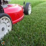 Divine Design Lawn and Landscape. Beat the heat and get your lawn cut cheap!