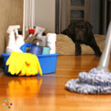 House Cleaning Company, House Sitter in Hudson