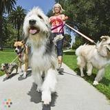 Dog Walker in Kitchener