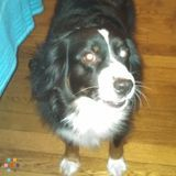 Need Doggy day care on 11/8/14 in Ellensburg WA. For about 5 hrs or so.