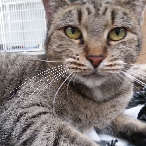 Pet Care Provider Galina B Gallery Image 1