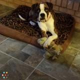 Dog Walker, Pet Sitter in Littleton